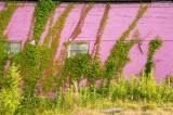 Hot Pink Wall - Vicksburg MS