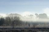 Pearl River Marsh