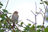 clay-colored sparrow sandy point plum island