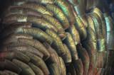 turkey feathers plum island