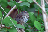 ???? sang was not song sparrow worlds end