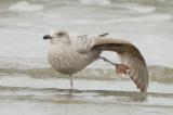 gull emerson rocks plum island