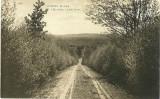 Guinea Ridge Road