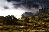 Yuanyang, Yunnan 2012