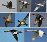 Bird Photo Archive