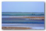 01 HL_cam__MG_5490 paysage camargue.jpg