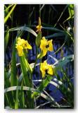 20 HL_cam__MG_5473 iris roubine.jpg