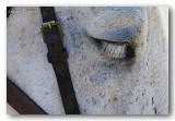 27 HL_cam_MG_5484 cils cheval.jpg