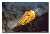 2011 - Une photo par jour - Selection Nature