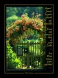 Henri LIMOUSIN Murmure d Image Vignette roses.jpg