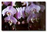 _MG_0168 nature fleur.jpg
