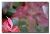 _MG_0176 nature fleur.jpg