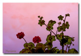 _MG_0633 nature vegetal.jpg