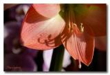 _MG_0640 nature fleur.jpg