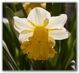 _MG_0647 nature fleur.jpg