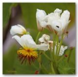_MG_0778 nature fleur.jpg