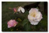 _MG_0796 nature fleur.jpg
