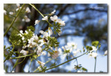 _MG_0869 nature fleur.jpg