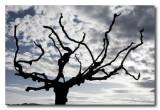 _MG_1251 nature arbre.jpg