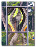 IMG_2424 nature arbre reflet.jpg