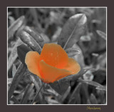 _MG_ 1380 nature fleur.jpg