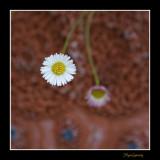 _MG_1764 nature fleur.jpg