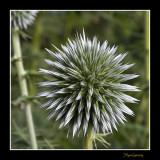_MG_2090 nature plante.jpg