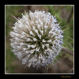 _MG_2102 nature plante.jpg