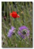_MG_2117 nature fleur.jpg