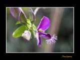 _MG_2228 nature fleur.jpg