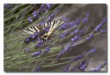 _MG_2350 nature animal.jpg