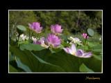 _MG_2768 nature fleur.jpg