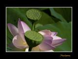 _MG_2769 nature fleur.jpg