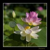 _MG_2771 nature fleur.jpg