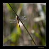 _MG_2792 nature animal.jpg