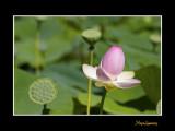 _MG_2838 nature fleur.jpg