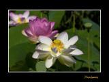 _MG_2843 nature fleur.jpg
