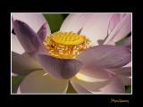 _MG_2846 nature fleur.jpg