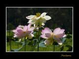 _MG_2853 nature fleur.jpg