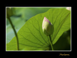 _MG_2928 nature fleur.jpg