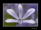 _MG_2533 nature fleur.jpg