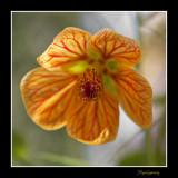 _MG_2582 nature fleur.jpg