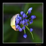 _MG_2636 nature fleur.jpg