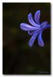 _MG_2652 nature fleur.jpg
