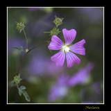 _MG_2948 nature fleur.jpg