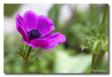 _MG_1489 nature fleur.jpg