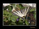 _MG_2549 nature animal.jpg