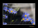 _MG_2715 nature animal.jpg