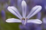 _MG_2533 NATURE fleur vignette.jpg