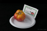 Pesty Bicolor_hf.jpg
